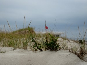 Northwest Wind Primary Dune Island Beach Sept 2014