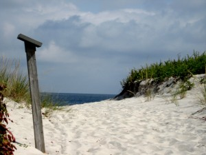 Survivors  Primary Dune Grasses Atlantic Ocaen Island Beach Sept 2014