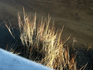 Dockside Grasses Scotts Landing Nov. 2014 016