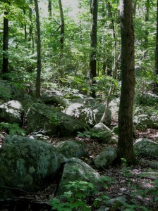 Sourlands Rocks in Preserve off Greenwood Avenue, Hopewell