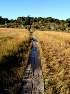 Walking the Plank, Brewster Marsh, Wing Trail at Low Tide