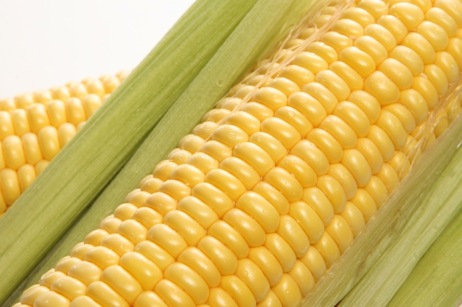 sweet corn close-up from Internet