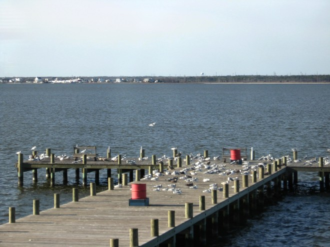 barnegat-bay-at-breakfast-time-island-beach-dec-2016