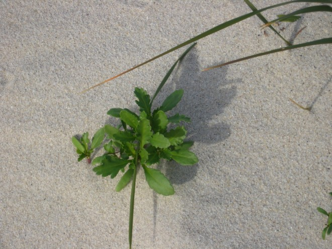 fresh-green-growth-oceanside-walk-island-beach-dec