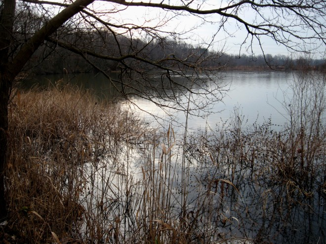 all-will-be-well-spring-lake-abbott-marshlands