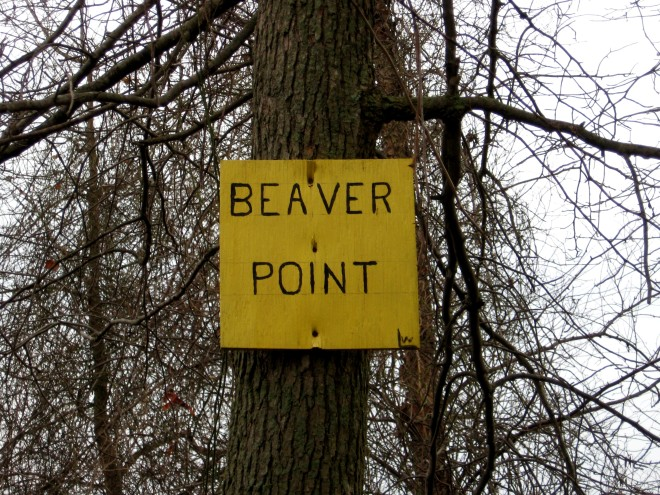 beaver-point-abbott-marshlands