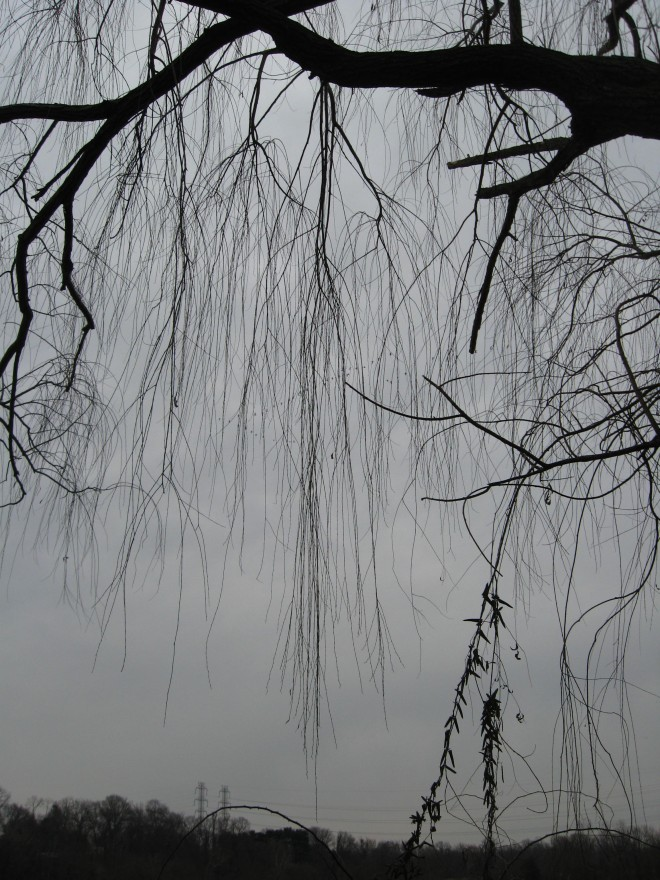 natures-mourning-abbott-marshlands