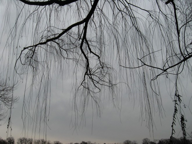 willow-weep-for-me-1-abbott-marshlands