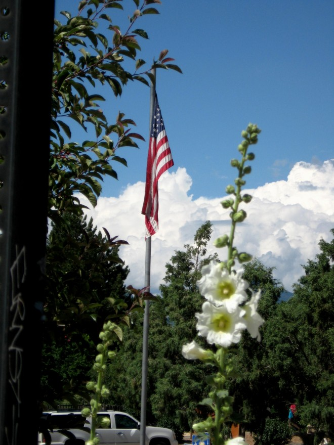 Taos Hollyhock and Flag 2016