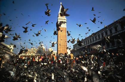 Venice-pigeons-on wing